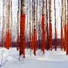 Васильев Юрий. Russian Red Project «Сегменты»