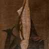Белоусов В. «Рыба»
